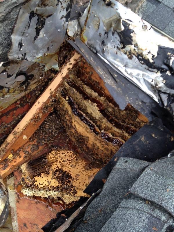 Swarms Capital Area Beekeepers